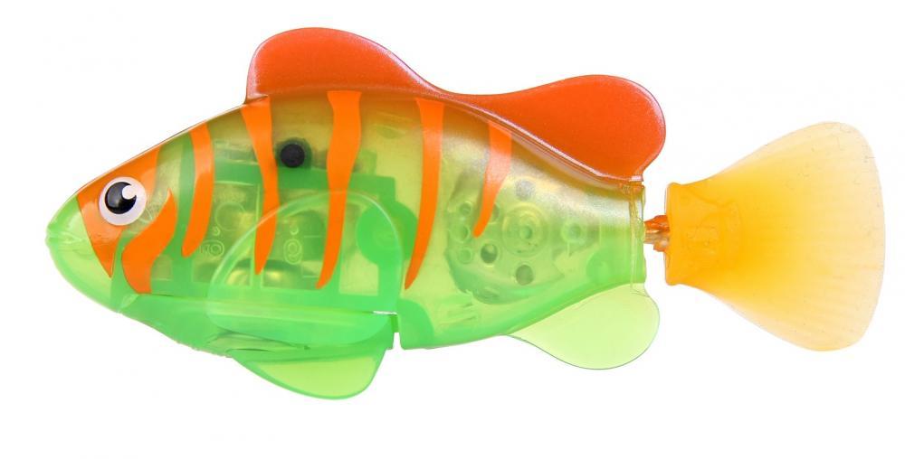 Robo ryba svítící - Duhovka